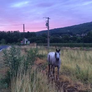 Horse in a paddock with pink sky sunrise