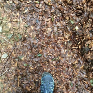 Walking boot with forest leaves on the path