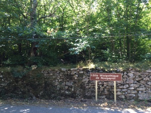 Dry stone wall and trees with Visigoth sign