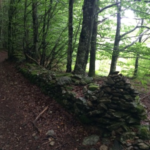 Ancient stone walls and beech trees